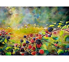 Fruit Harvest Photographic Print