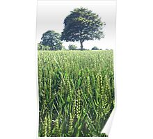Green Wheat Field in Summer Poster