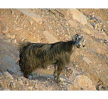 Shaggy goat on mountain Photographic Print