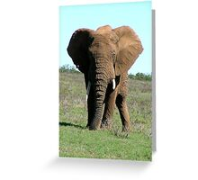 Elephant flapping ears Greeting Card