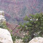 The Grand Canyon, Arizona(South Rim) by David  Hughes