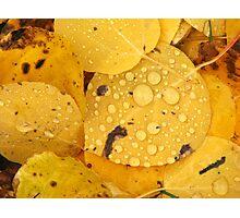 Aspen Leaves Photographic Print