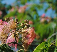 Pink blossom in the wind  by Roni-nica