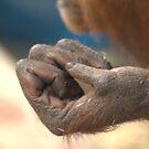 Reaching Out, Holding On - Orang-utan Series by Rosemaree