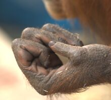 Reaching Out, Holding On - Orang-utan Series by Rosemaree
