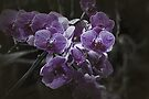 Purple Orchid by Elaine Teague