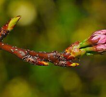Spring  by John  Kowalski