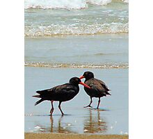 Oyster catchers Photographic Print