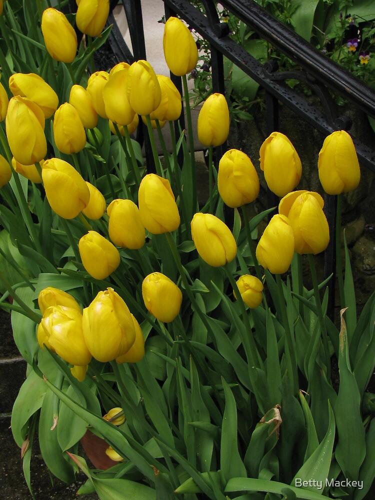 Yellow Tulips by Betty Mackey