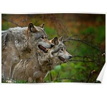 Timber Wolves Poster