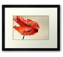 paper poppy Framed Print