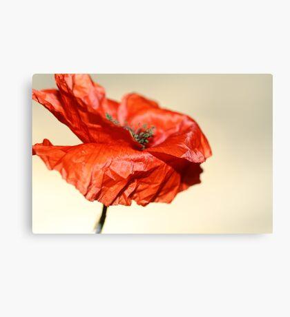 paper poppy Canvas Print