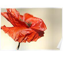 paper poppy Poster