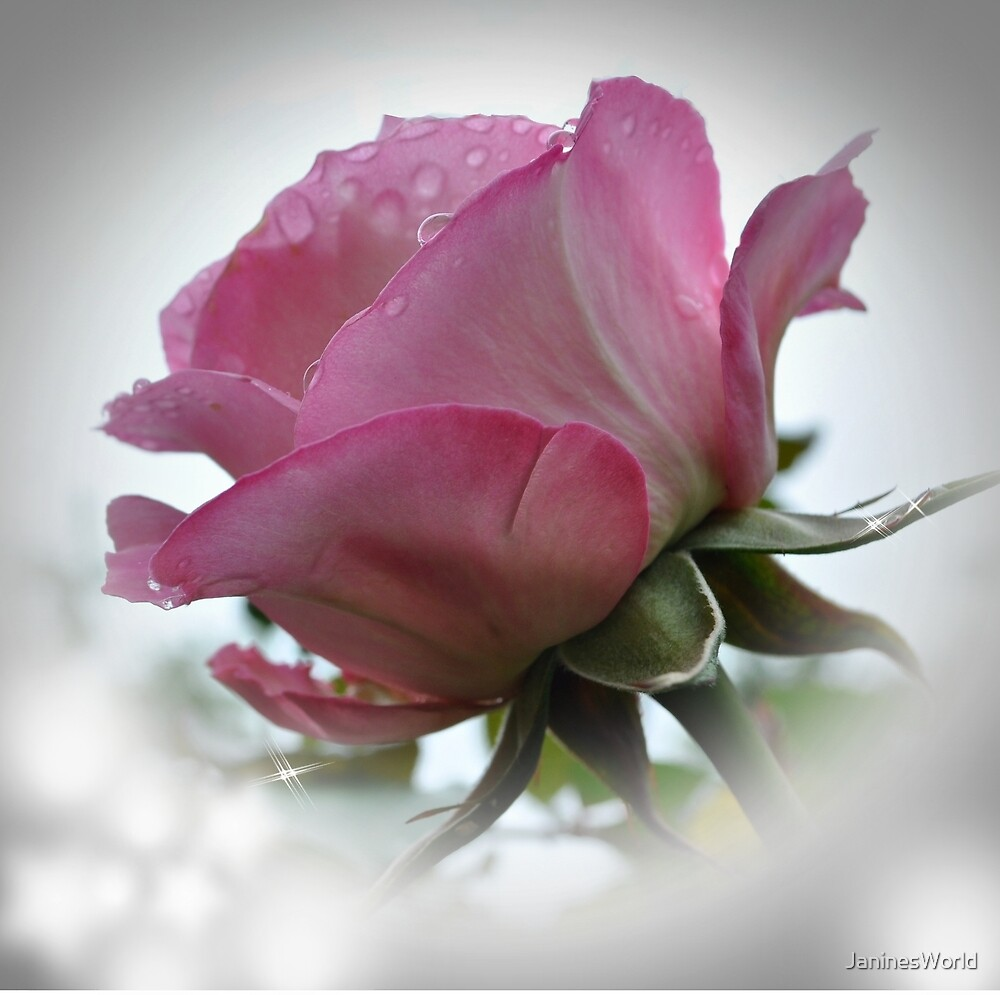Rose's Kingdom! by JaninesWorld