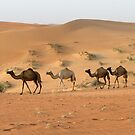 Camels in the dunes by Gareth Leggett