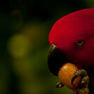 Mad about nuts :) by vasu