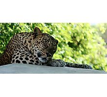 What Cats Do Best Photographic Print