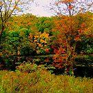 Clark's Falls, North Stonington, CT by Debbie Robbins