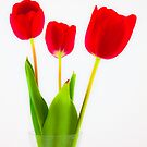 Three Tulips by rudolfh