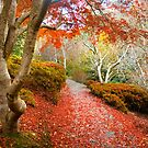 Autumn at Mount Lofty Botanic Garden by Kelvin  Wong