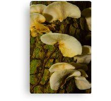 Fungi on dead tree. Canvas Print
