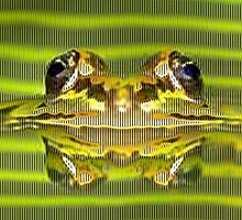 Frogs Electrifying Reflection by Linda Miller Gesualdo