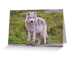 They're Growing - Arctic Wolf Pups  Greeting Card