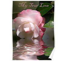 My True Love Poster