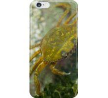 Carcinus Maenas Crab iPhone Case/Skin