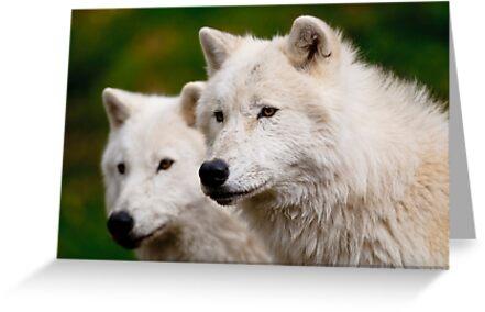Arctic Wolf Pair by Michael Cummings