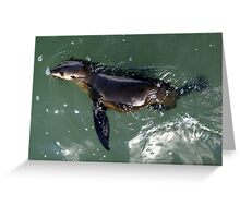 Meeting with  a seal, Hastings, Vic. Greeting Card