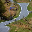 Scotland - Sheep race. by Jean-Luc Rollier