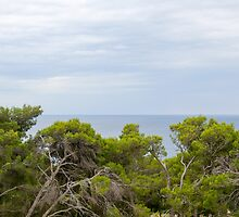 Gnarled Trees and Sea by Inimma