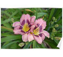 Cozy Day Lilies In The Garden Poster