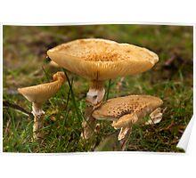 Fungi Close-Up Poster
