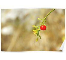 Wild Fruit Poster
