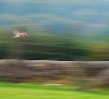 on the wing by brian mcdonnell