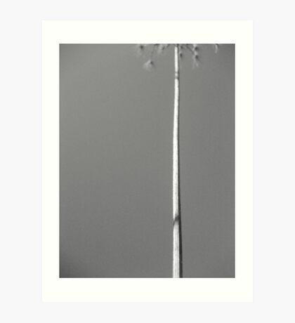 The solitary stalk Art Print