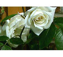 White Rose #1 Photographic Print