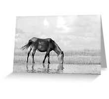 Wild Horse on the Flats Greeting Card