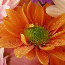 Orange flower by Jasna Bogdan
