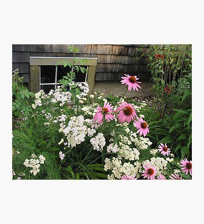 Garden Musings Photographic Print