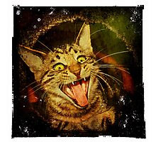 Taming the Tiger - Nice, kitty, kitty Photographic Print