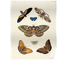 Exotic butterflies of the three parts of the world Pieter Cramer and Caspar Stoll 1782 V1 0224 Poster