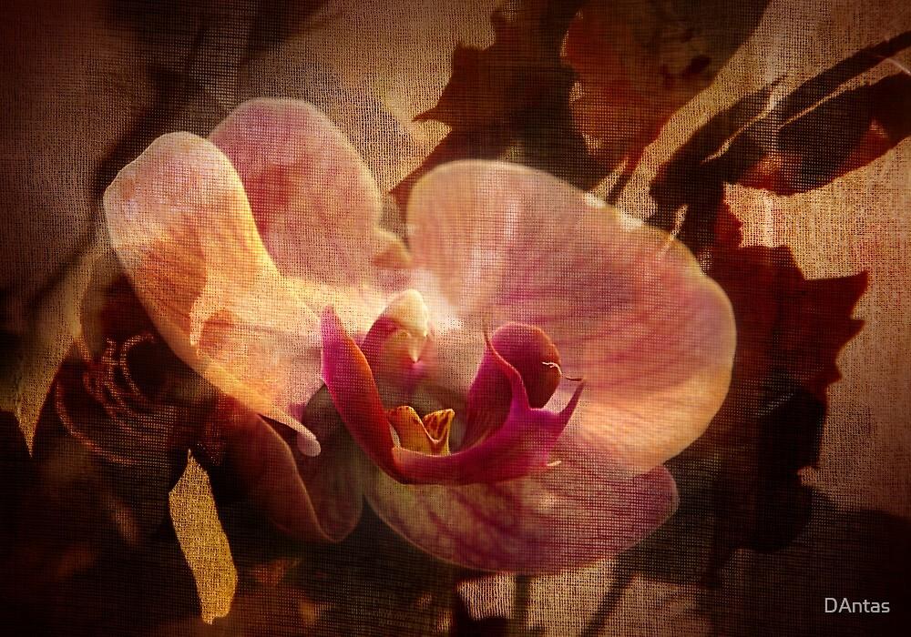 The Poetry Of Florist's 2 by Danuta Antas