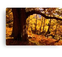 Autumn colours near Ullswater - The Lake District Canvas Print