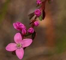 Pretty in pink by wrighty