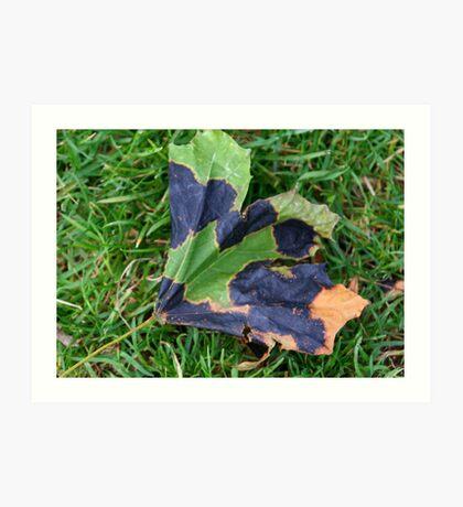 A Multi-colored Leaf Art Print
