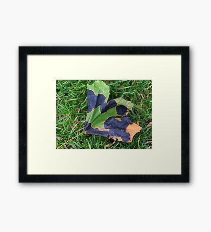 A Multi-colored Leaf Framed Print