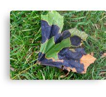 A Multi-colored Leaf Metal Print